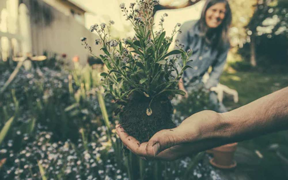 30 Essential Gardening Tips for Beginners FI