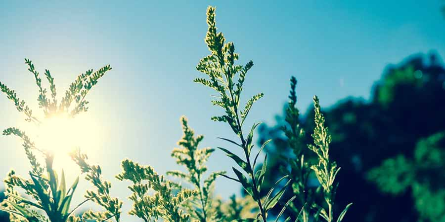 Solar Radiation Affecting Plant Growth