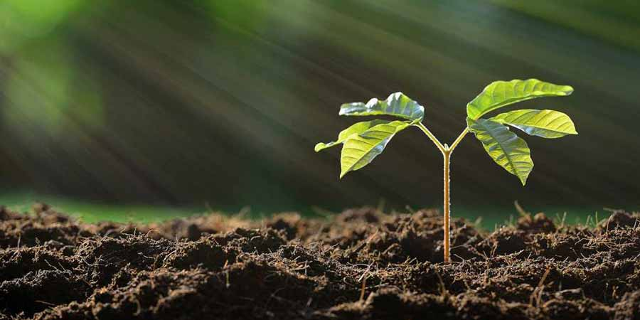 7 factors affecting plant growth