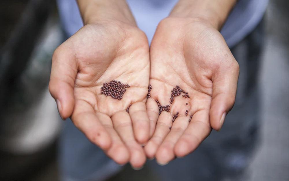 Best Grass Seed For Your Garden FI