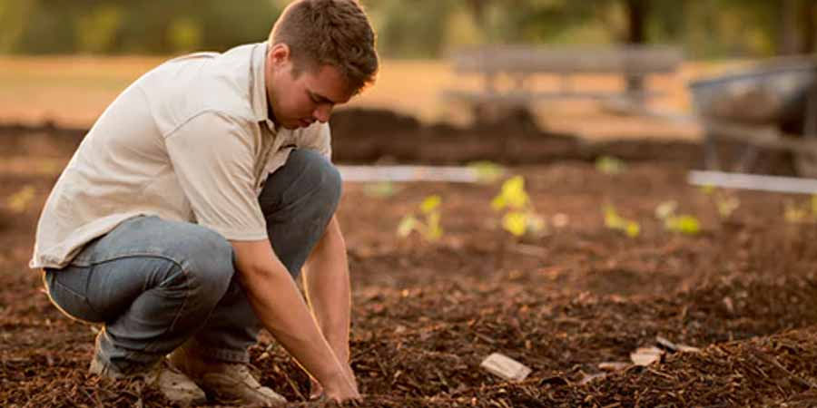 Soil testing and fixing