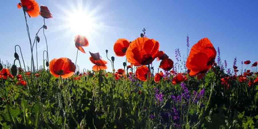 Obtaining Flowers